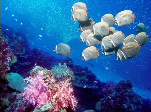 及热带鱼等等海底动物